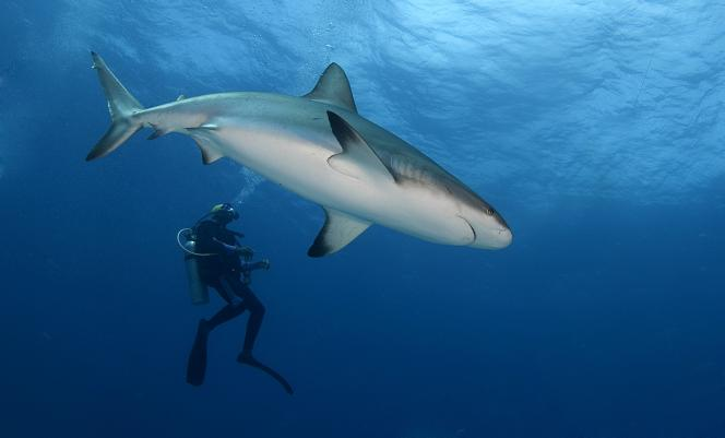 11 daagse Shark Diving Special 2*
