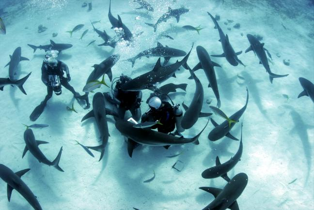 11 daagse Shark Diving Special 1*