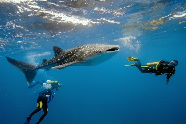 11 daagse Shark Diving Special 3*